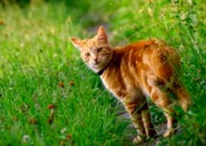eliminar parasitos en gatos